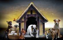 Intolleranze alimenti del cane: i sintomi e le possibili soluzioni