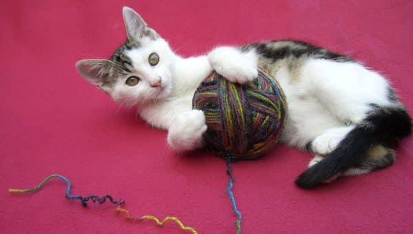 I cinque consigli su come rendere felice il gatto