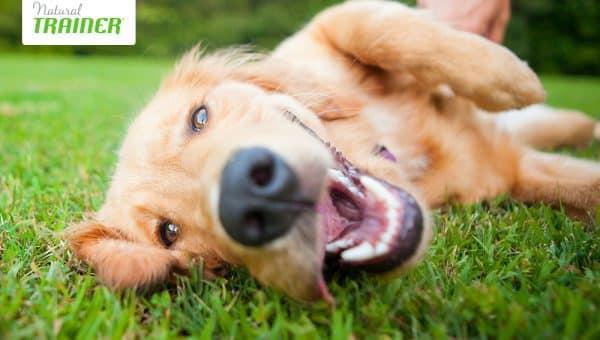 Umido o secco? L'importante è che sia Natural Trainer, il brand che ha rivoluzionato il mondo del pet food.