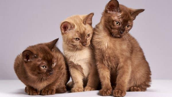 Alternare cibo secco e umido è la soluzione ideale per il nostro gatto