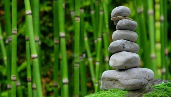 Dalla fitoterapia alla meditazione: le guide dedicate alla medicina alternativa